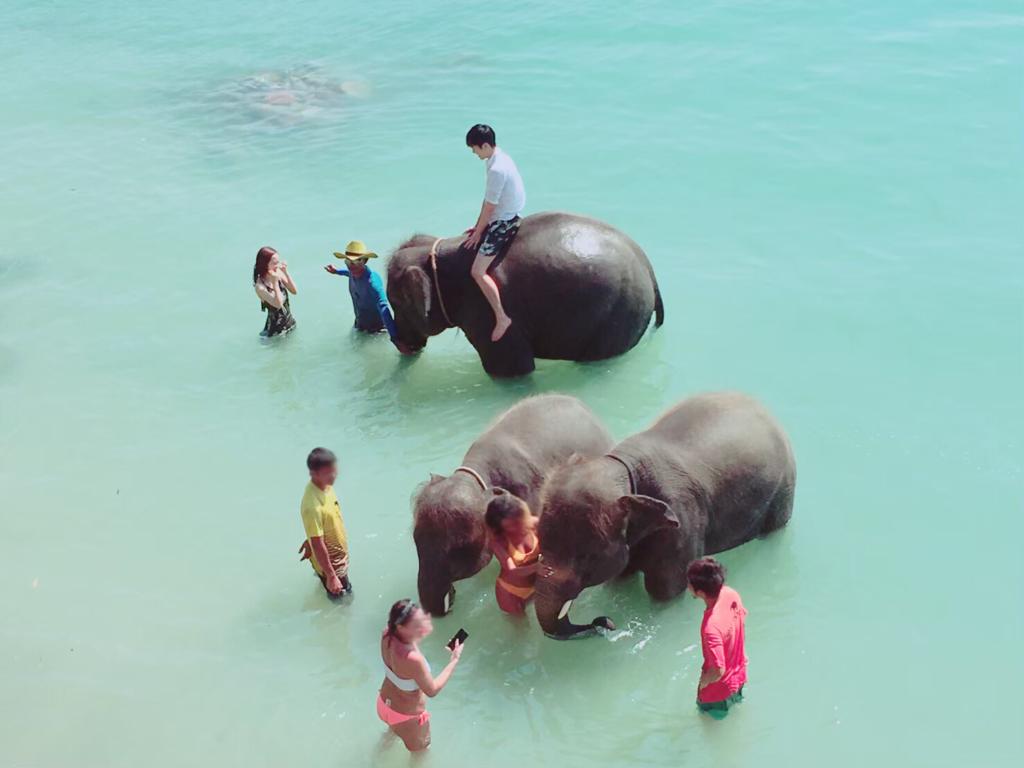 プーケットのビーチで象乗り体験