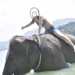 プーケットのビーチで象に乗ってきた!!予約~体験まで